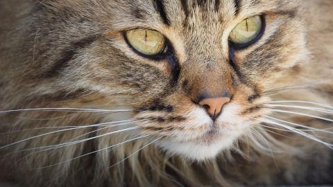 cat-1393075_1280