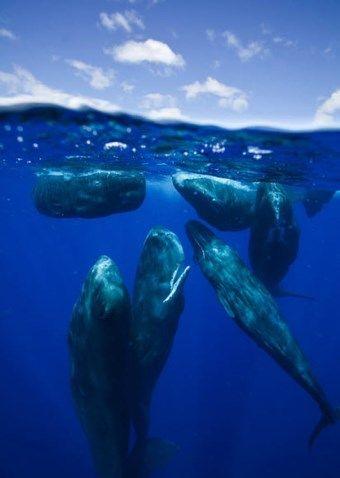 52 孤独なクジラを探して : ひか...