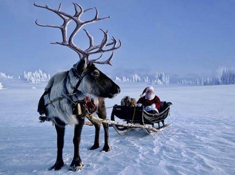 reindeer-santa-753452
