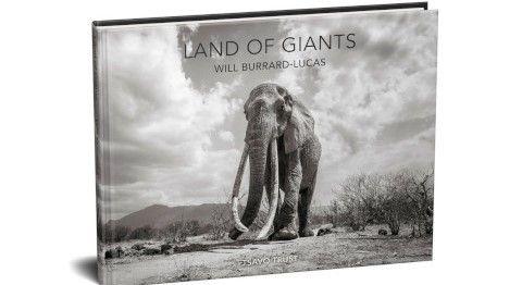 will-burrard-lucas-elephant-queen-9
