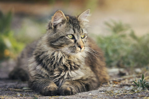 cat-3449999_1280