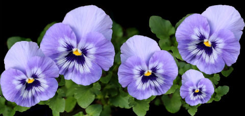 flowers-4199586_1280