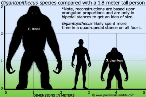 gigantopithecus-size