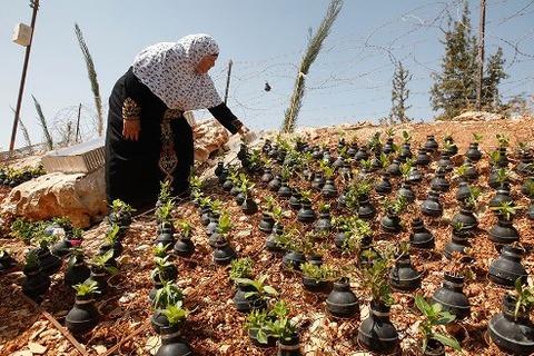 tear-gas-flower-pots-palestine-1