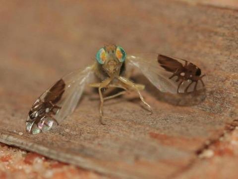 3-flies
