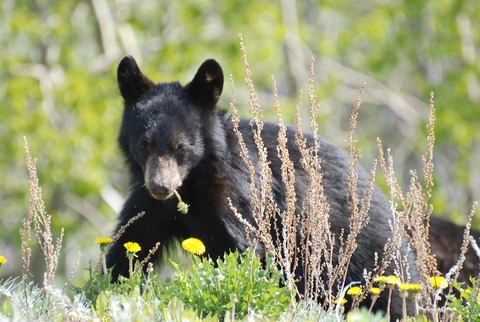 young-bear-2714670_1280