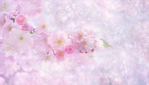 cherry-blossom-3054799_1280