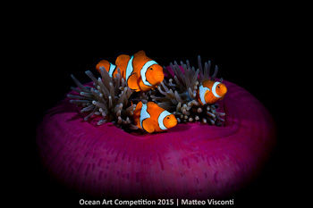 2nd-wa-ocean-art-2015-matteo-visconti-350