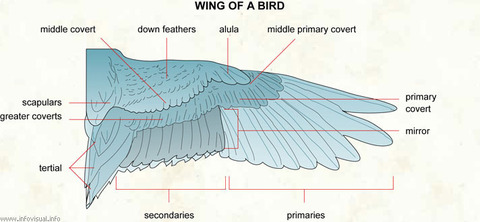 057 Wing of a bird