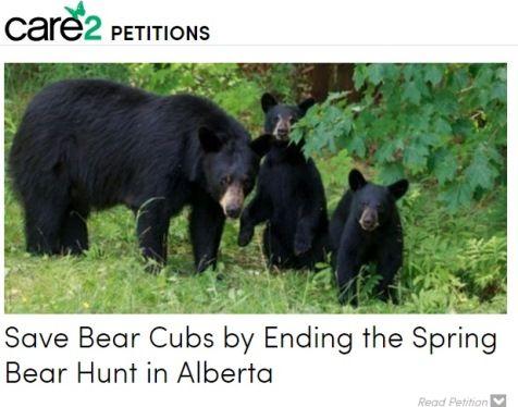 bearsss