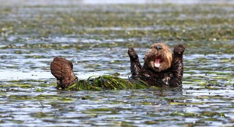 comedy-wildlife-photography-awards-2017-2