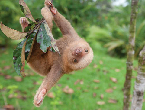 slothinstitute3