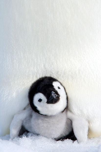 ZaegbrPsBCYRvm7K6mfG_penguin