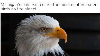 baldeagles23