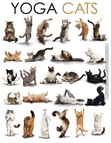 funny-cat-picture-yoga-cats