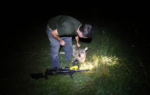 kangaroohunt14