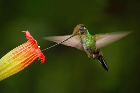 Hummingbird-Spirit-Animal-8