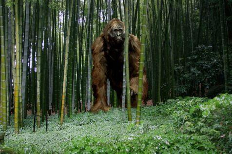 gigantopithecus_b