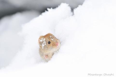 iKSPfAzZnTwNW49ZdanK_snow2