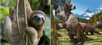 ancient-sloth-evolution-Mylodon-darwini