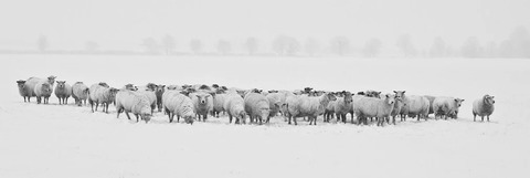winter-1142029__340
