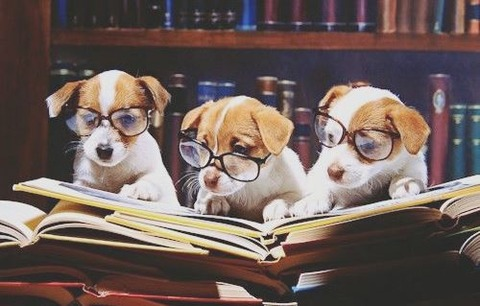 8ea9c1c5c4a88008a367f5e9bc401618--read-books-adorable-animals