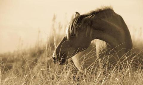 2-wild-horse-on-the-beach-diane-diederich