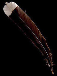 feather220_1663627f