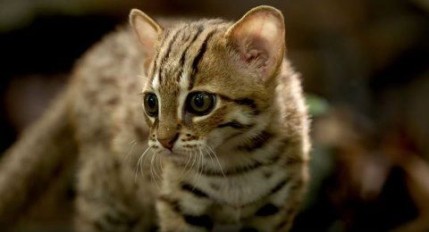 worlds-smallest-cat-8