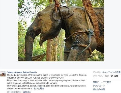 elephantride2