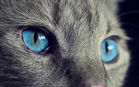cat-1285634_960_720