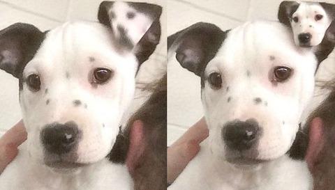 rescue-puppy-selfie