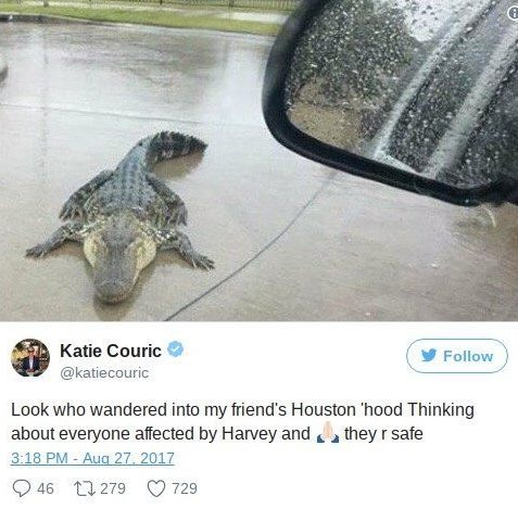 alligator_houston
