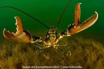 Cold-Water_Uwe_Schmolke_Lobster-attack-350