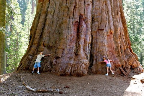sequoia-forest-california-_vq9n