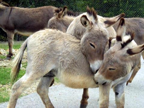 Donkey12