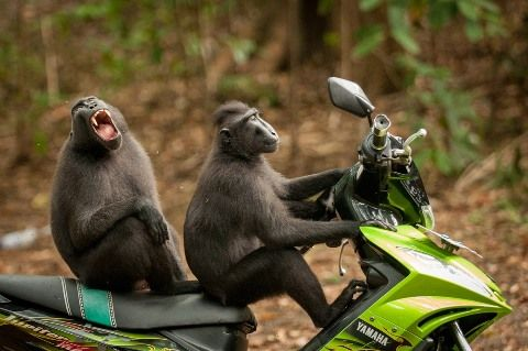 comedy-wildlife-photography-awards-2017-1