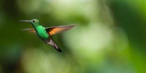hummingbird-2139278_960_720