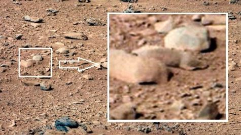 Mars-lemming-devon-island