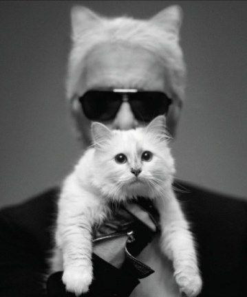 猫 インスタ 稼ぐ