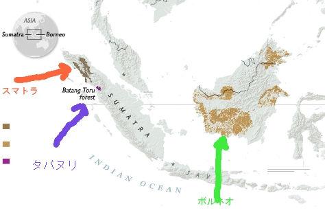 ngnews-new-orangutans_ai2html-620