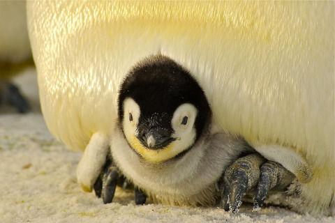 penguin-429125_1280