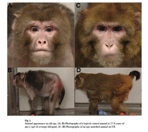 rhesus-monkeys-picture1