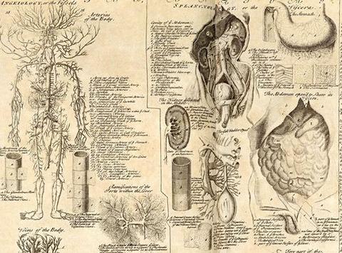 Anatomica2