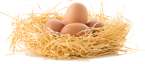 drive-the-eggs-3070850_960_720