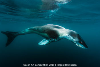 4th-c-ocean-art-2015-jorgen-rasmussen-350