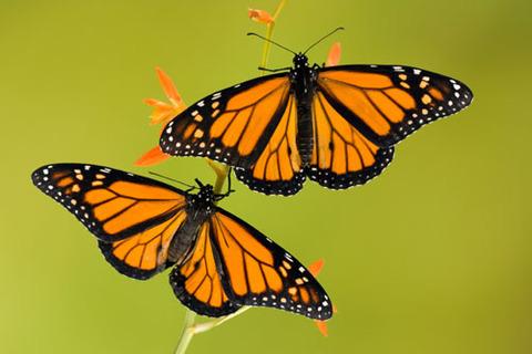 2butterflies