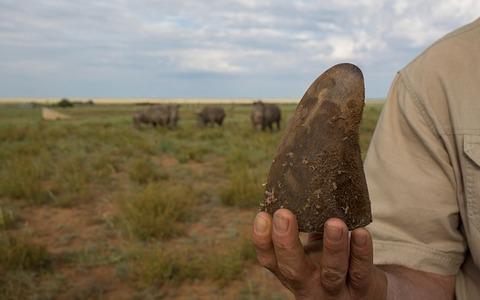 rhino-3_3582921b