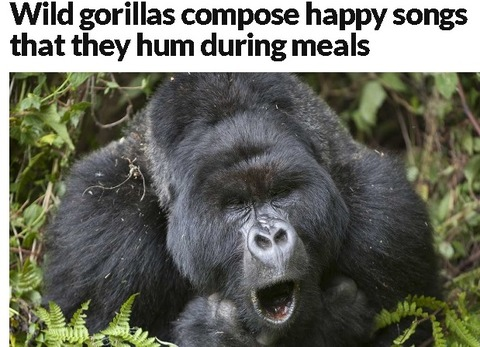 gorillasongs