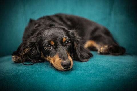 dog-2561134_1280